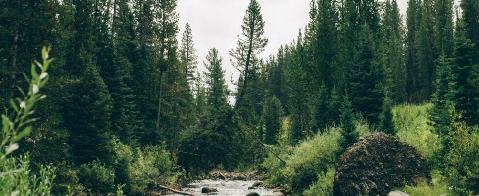Montana - Water 17